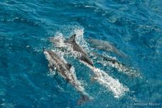 Banc de dauphins, Grand Lagon Sud