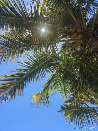 Cocotiers, Baie de Gadji