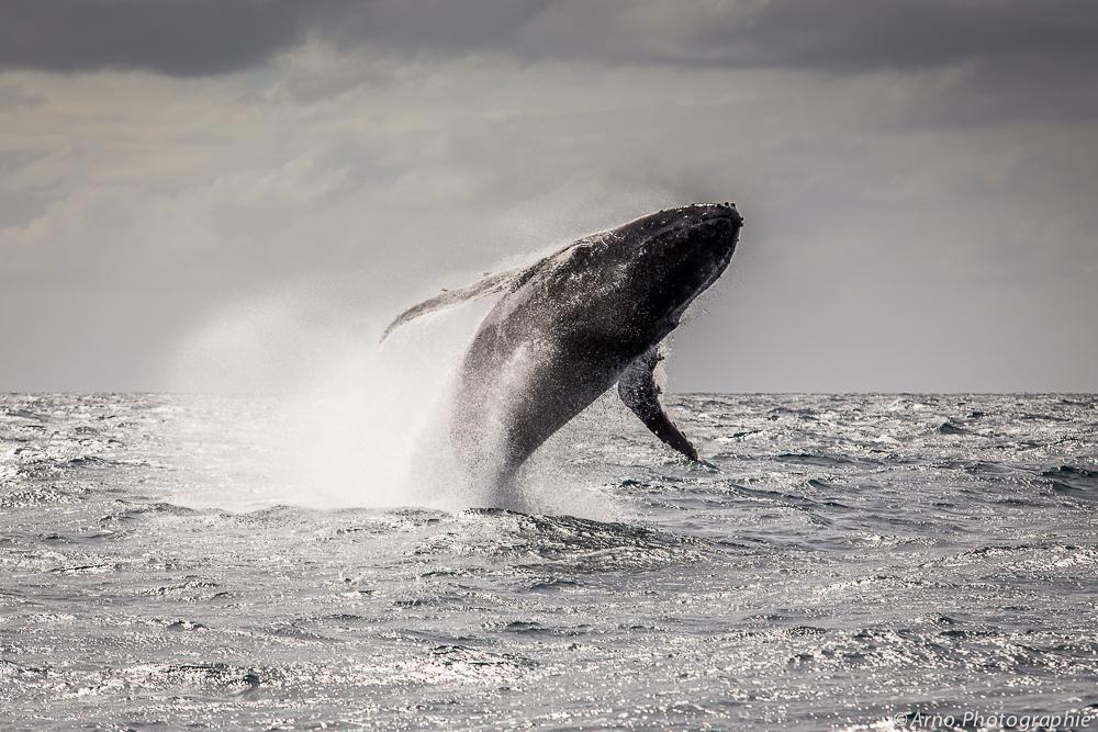 20140807_observation-baleine-prony-19