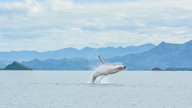 Croisière 3 jours Grand Lagon Sud / Observation des baleines à bosse