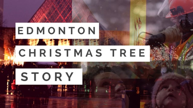 Edmonton Christmas Tree Story