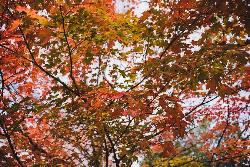 NY Autumn