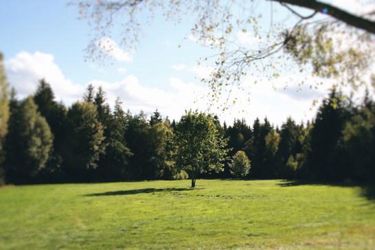 Toto je lesní palouk, na kterém stojí maringotka.