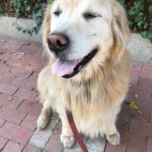 Fetch Pet Care Overnight Dog Care, Bembo, Bel Air, CA