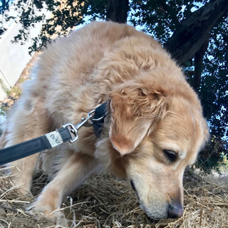 Tiberius, Fetch Pet Care Dog Walks & Dog Sitting, Hollwyood Hills, CA