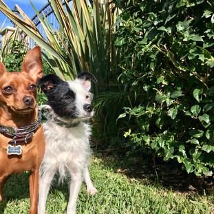 Fetch Pet Care Dog Walking, Lulu & Sammy, Sherman Oaks, CA