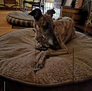 Overnight Pet Sitting with PG, North Hollywood, CA