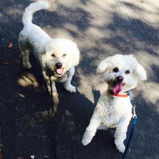 Harry & Gracie, Dog Walking & Pet Sitting Studio City, CA