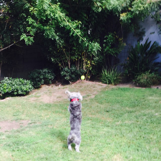 Fetch Pet Care Sitter playing