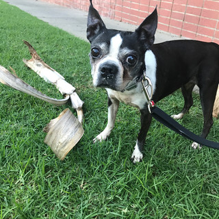 Fetch Pet Care Dog Playtime