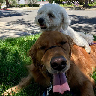 Tiberius & Kismet, Fetch Pet Care Private Dog Walks, West Hollywood, CA