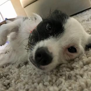 Fetch Pet Care Dog Walking, Pet Sitting, Cat Sitting & Overnight Pet Sitting, Van Nuys, CA