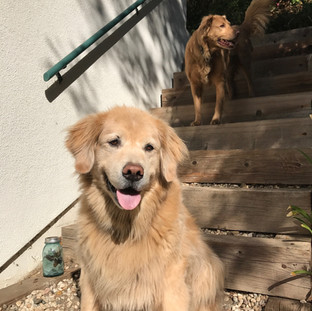 Bembo & Hakluyt, Overnight Dog Sitting & House Sitting, Bel Air, CA