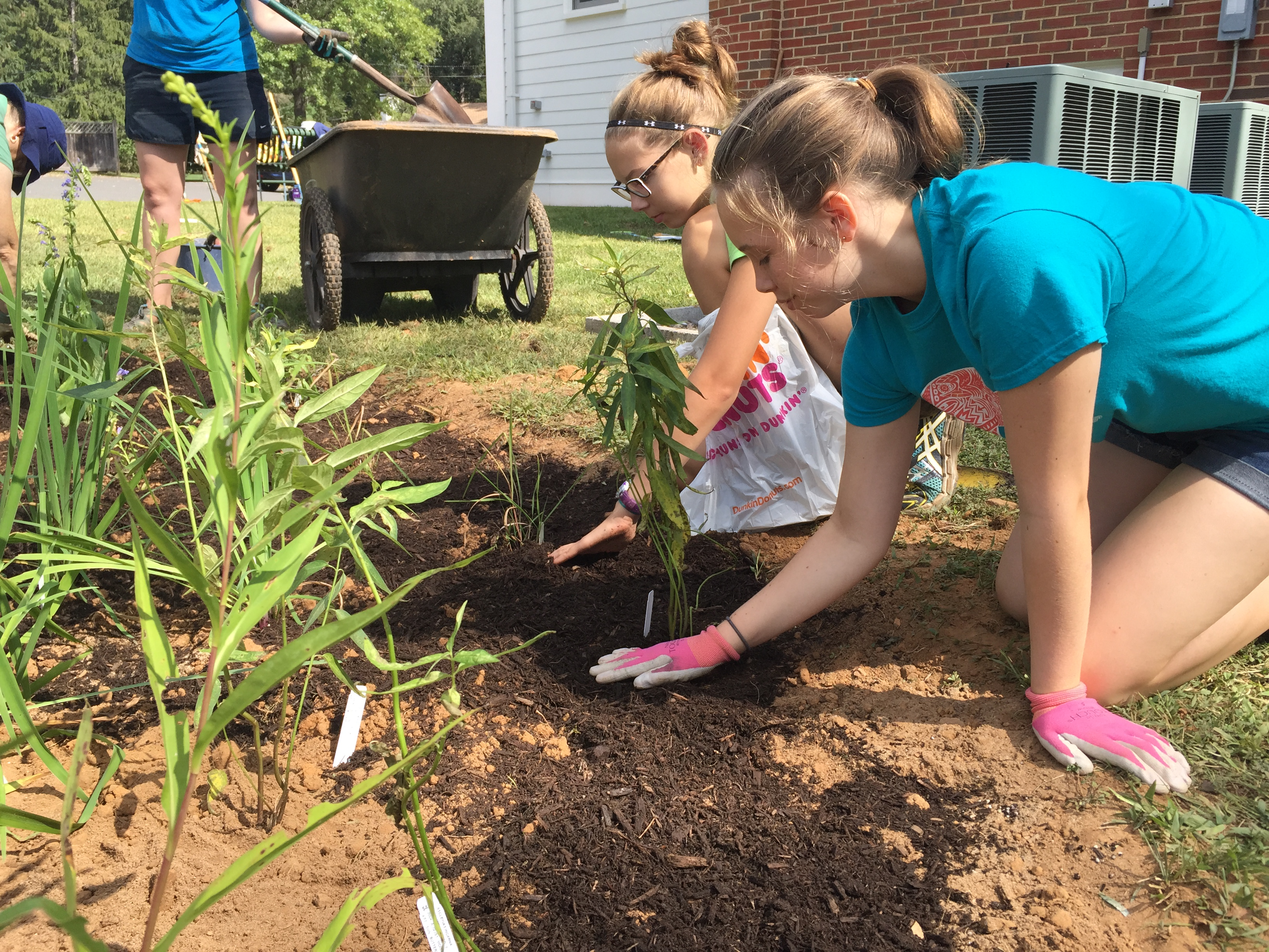 Planting Native Plants