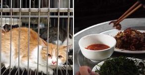 Шокирующее видео: кто и зачем торгует кошачьим мясом во Вьетнаме