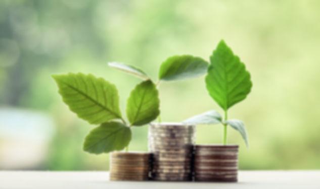 money exchange and money tree and financ
