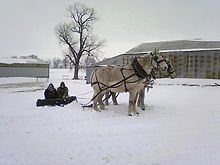 Draft Horses in the Snow
