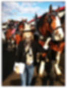 Kadee Coffman with Clydesdale Draft Horses at the Calgary Stampede