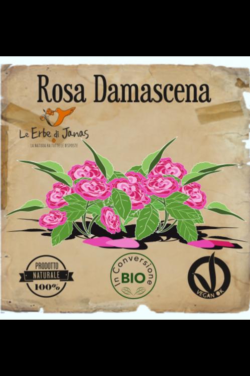 Rosa Damascena ( Erba Lavante ) - Le Erbe di Janas