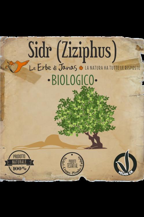 Sidr ( Ziziphus ) - Le Erbe di Janas