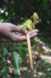 Wunder Workshop Fresh Cinnamon.jpg