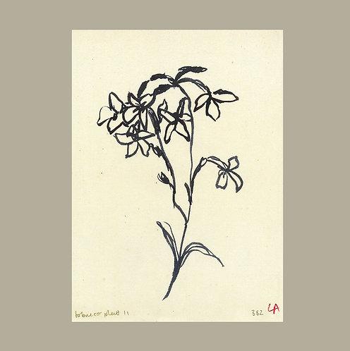 Lucy Augé - Tobacco Flower Art Print