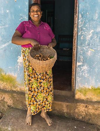 Turmeric Harvest 2020 Community Farm Knu
