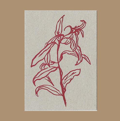 Lucy Augé - Letterpress Greeting Card - Dahlia Leaves