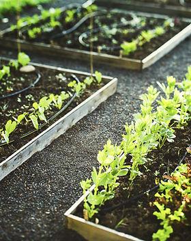 Het planten van Boxes