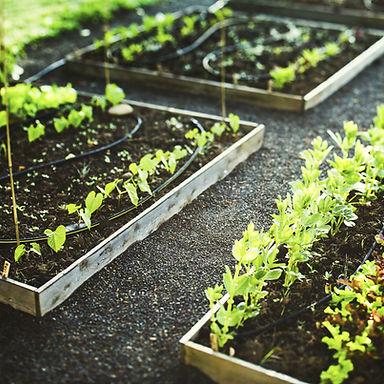 Plantation en terre