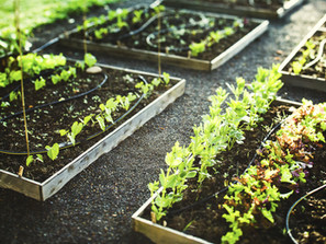 Planting A Garden - A Hobby For Your Health