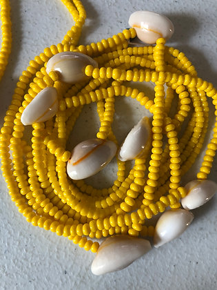 Yellow Cowrie
