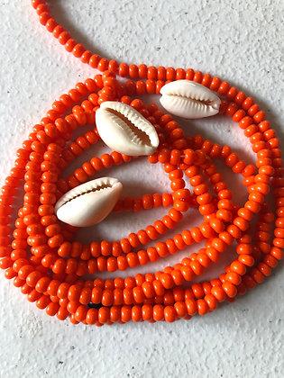 Orange Cowrie