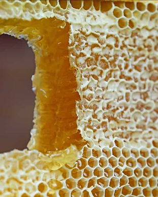 Honeycomb-with-a-cutout-featured.jpg