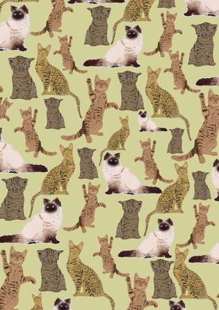 Katzen // Wallpaper // 2020