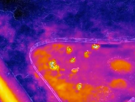 【実証実験】畜産・牧場におけるドローン利活用の取り組み(スカイワークス合同会社)