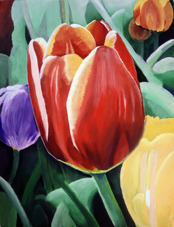 """""""Tulip"""" by Alfred Banks"""