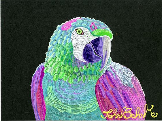 """""""Parrot 1"""" by John Behnke"""