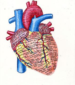 LD_The Heart256 (1).jpg