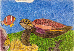"""""""Sea Turtle"""" by Franklin Armstrong"""