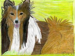 """""""Collie"""" by Coral Kappel"""