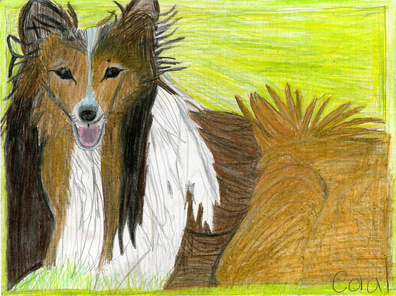 """Collie"" by Coral Kappel"