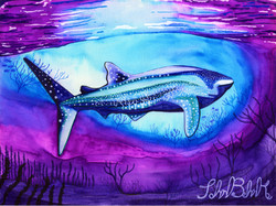 """Whaleshark"" by John Behnke"