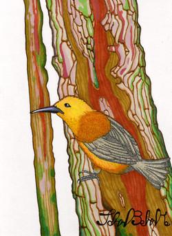 """Bird on Tree"" by John Behnke"
