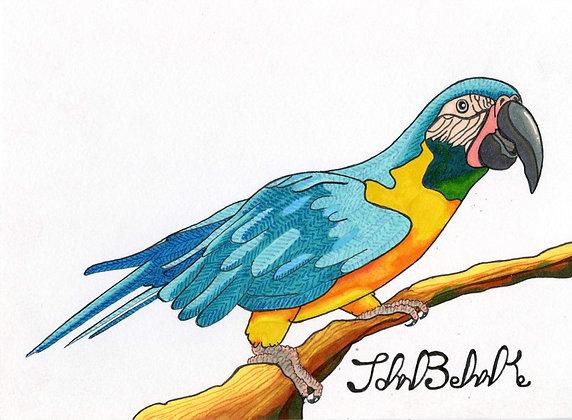 """""""Macaw"""" by John Behnke"""
