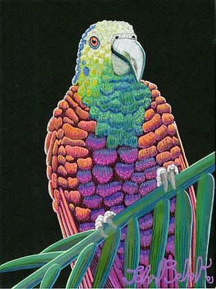 """""""Parrot 2"""" by John Behnke"""