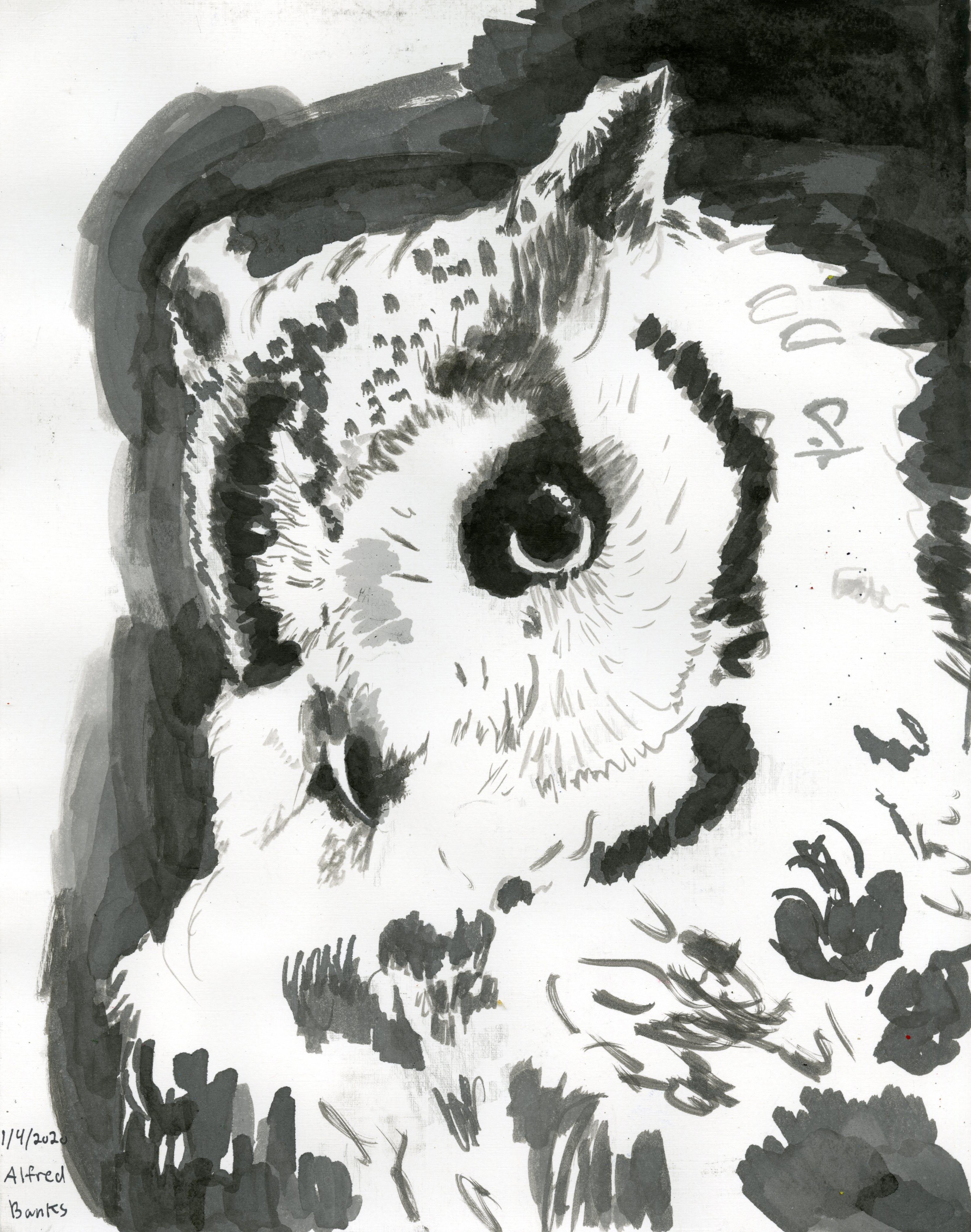 AB_Owl297 (1)