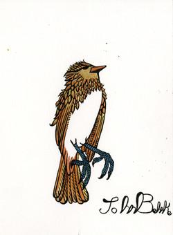 JB_bird341