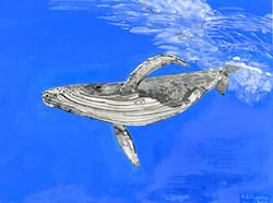 """""""Humpback Whale"""" by R.J. Juguilon"""