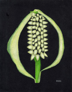 """""""Peace Lily"""" by Ryan Tepich"""
